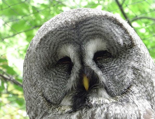 Owl Skull Bird Fowl Head