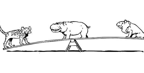 Animals Faunae Alternate See Understand Seesaw Fre