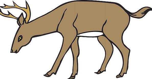 Deer Landscapes Inclined Nature Down Depressed Lea