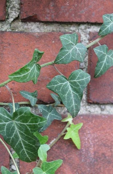 Ivy Landscapes Cinder Nature Green Lime Clinker Gr
