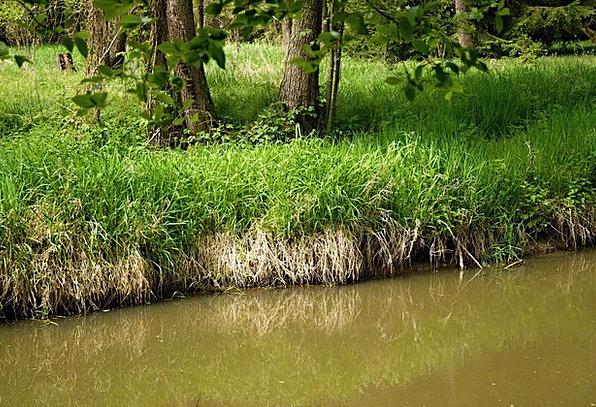 Joist Beam Likeness Southern Reflection River Bohe