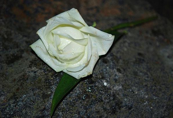 White Snowy Design Flower Floret Rose Blossom Spri