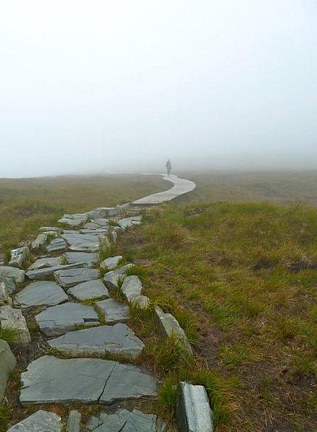 Misty Hazy Landscapes Mist Nature Walk Gait Fog Pa