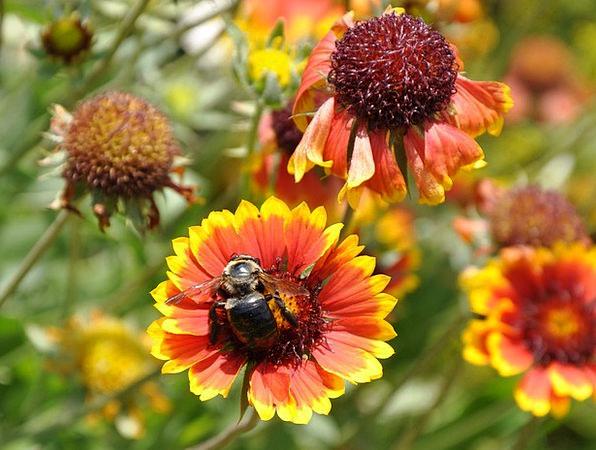 Flowers Plants Garden Plot Bee