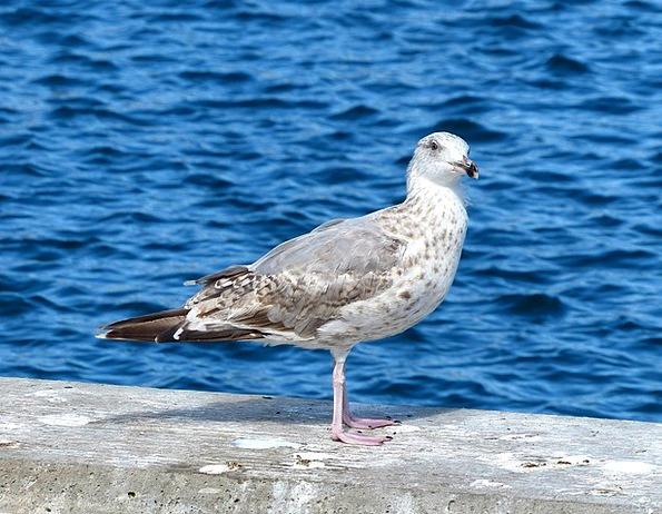 Bird Fowl Animal Physical Seagull Water Bird Veste