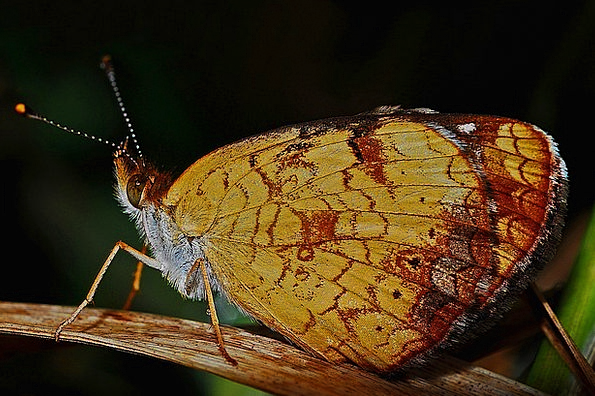 Butterfly Instruction Insect Bug Macro Nature Coun