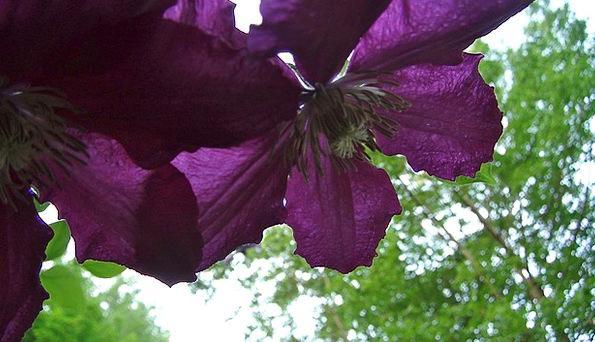 Flower Floret Landscapes Nature Purple Elaborate C