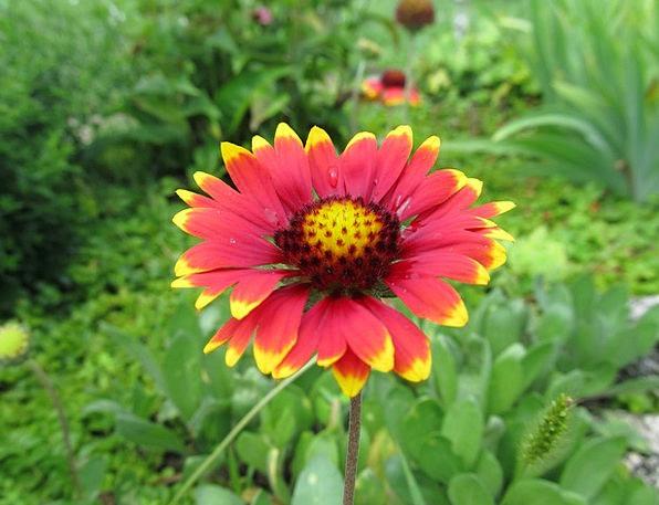 Flower Floret Landscapes Plot Nature Plant Vegetab