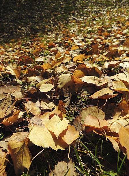 Leaves Greeneries Fall Ocher Yellowish-brown Autum