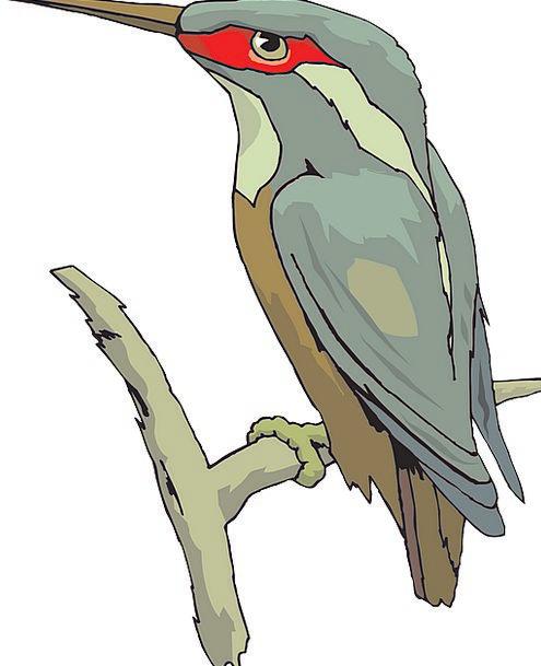 Bird Fowl Annexes Beak Bill Wings Feathers Downs K