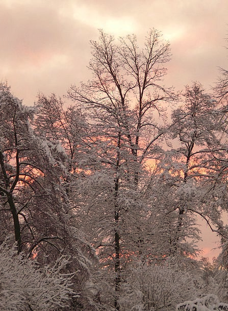 Winter Season Landscapes Chilly Nature Snow Snowfl