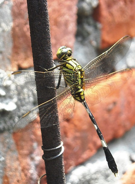 Dragonfly Lime Black Dark Green Wire Cable Wall Pa