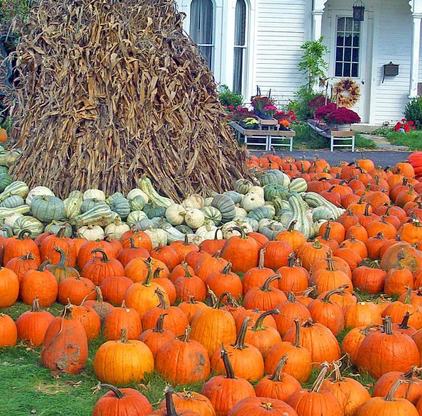Pumpkins Buildings Architecture Corn Goo Gourds St