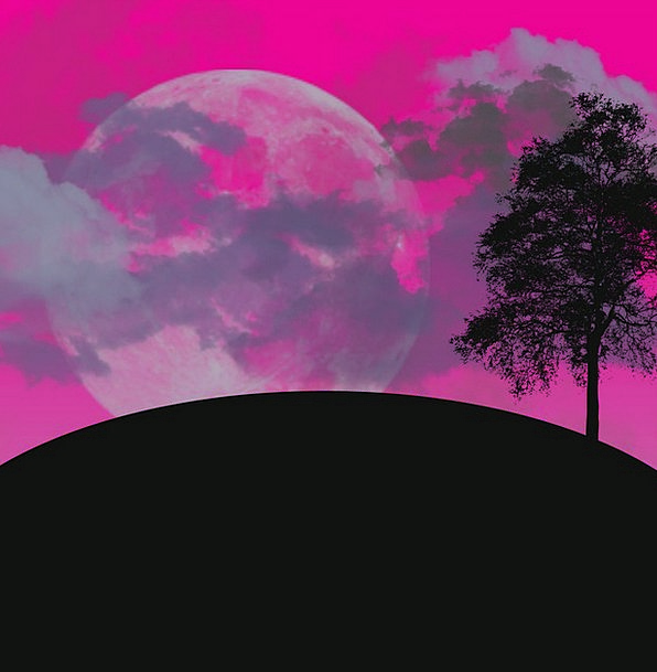 Moon Romanticize Landscapes Sapling Nature Silhoue