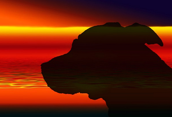 Dog Canine Sundown Silhouette Outline Sunset Rest