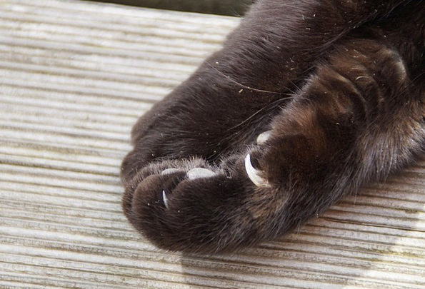 Paw Hand Foot Base Cat Paw Cat'S Paw Ten Animal Cl