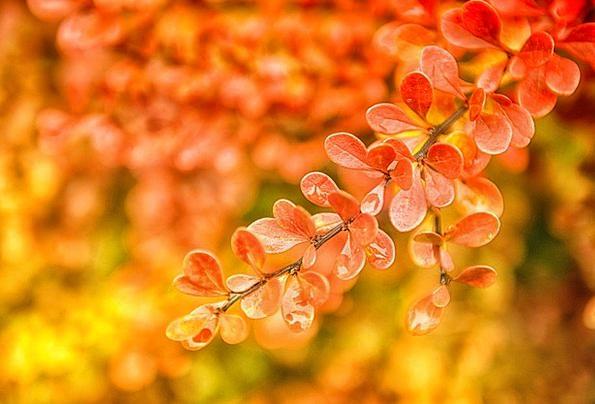 Autumn Fall Greeneries Orange Carroty Leaves Yello