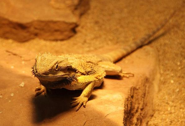 Gekko Reptile Lizard Animal Physical Animal World