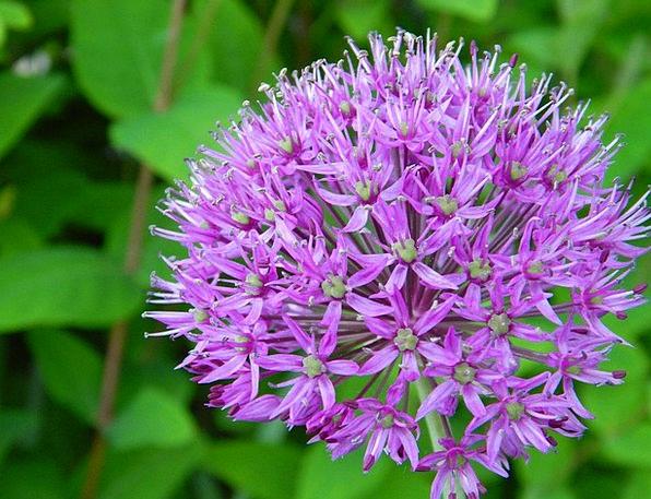 Purple Elaborate Floret Red Purple Flower Purple F