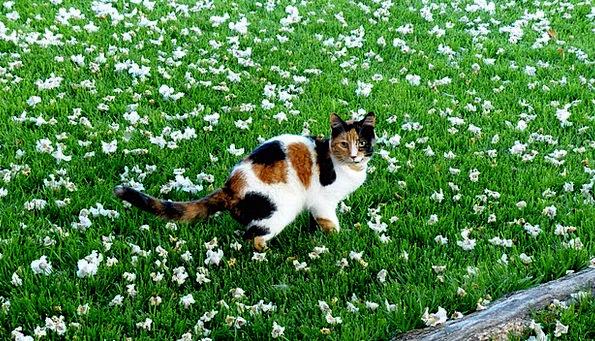 Animal Physical Feline Catlike Cat Grass Lawn Blos