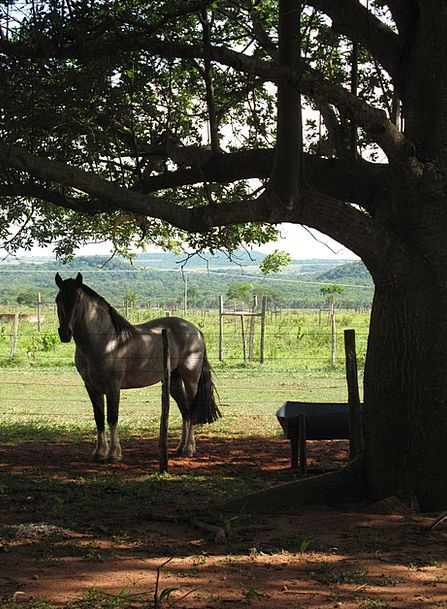 Horse Mount Taillight Farm Farmhouse Backlight Cou