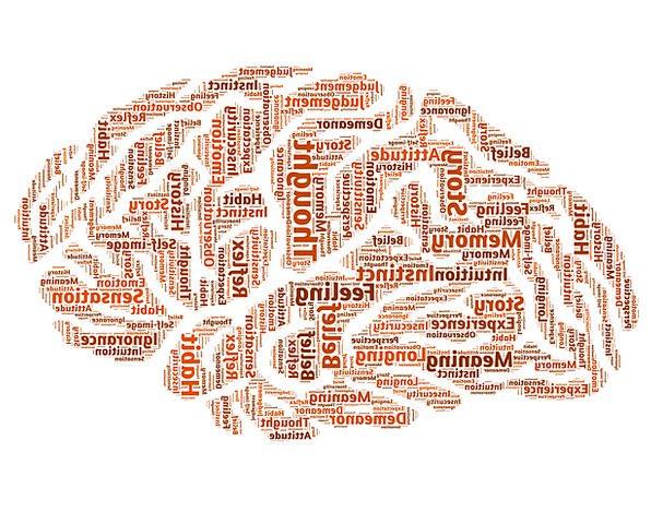 Brain Attention Mindset Attitude Mind Solution Rea