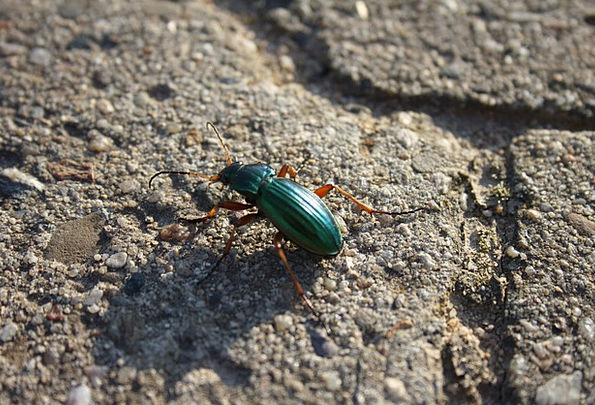 Beetle Physical Nature Countryside Animal Forest W