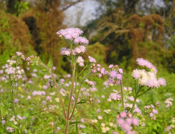 Nepal Floret National Park Flower Chitwan
