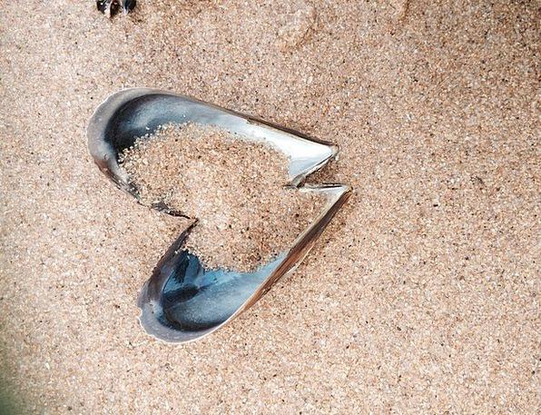 Heart Emotion Vacation Travel Sand Shingle Seashel