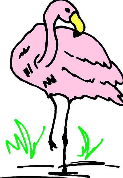 Water Aquatic Flushed Bird Fowl Pink Grass Lawn Fl