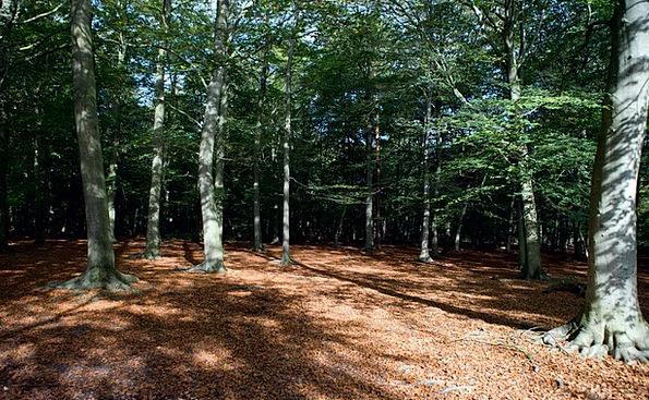 Woodland Landscapes Nature Autumn Light Forest Out