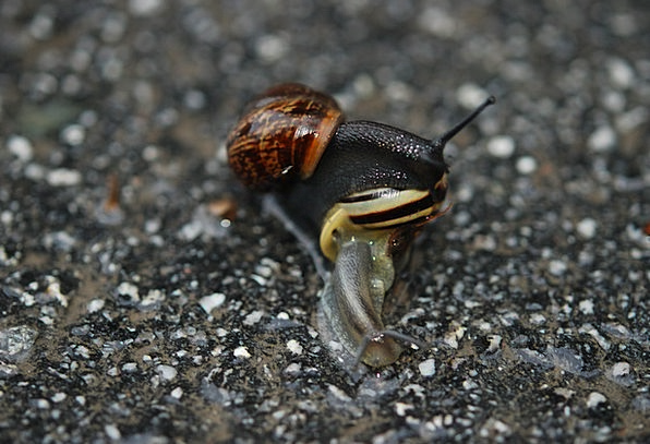 Animal Physical Darling Sex Gender Love Snails Nat