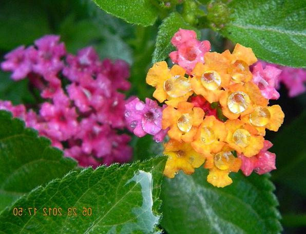 Flower Floret Landscapes Nature Nature Countryside