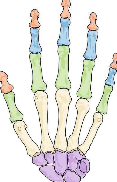 Health Fitness Medical Health Human Skeleton Free 7564 health, fitness, medical, minimum, health, human, humanoid, skeleton