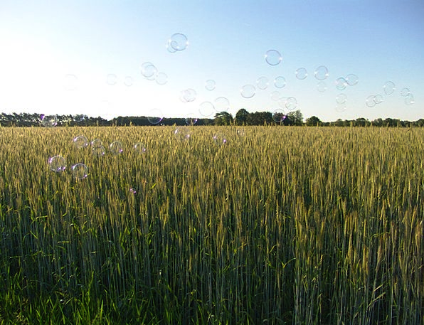 Grain Ounce Landscapes Mueslis Nature Nature Count