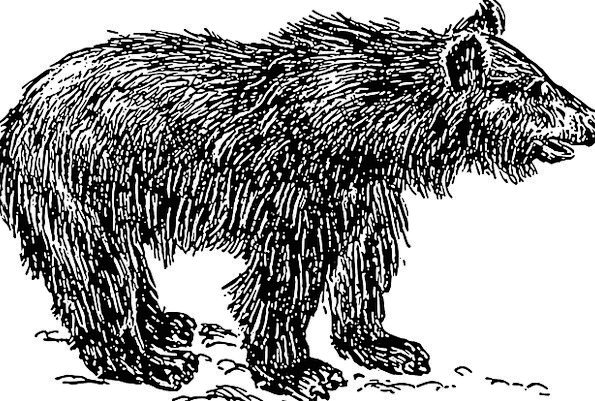 Cub Novice Tolerate Baby Darling Bear Furry Small