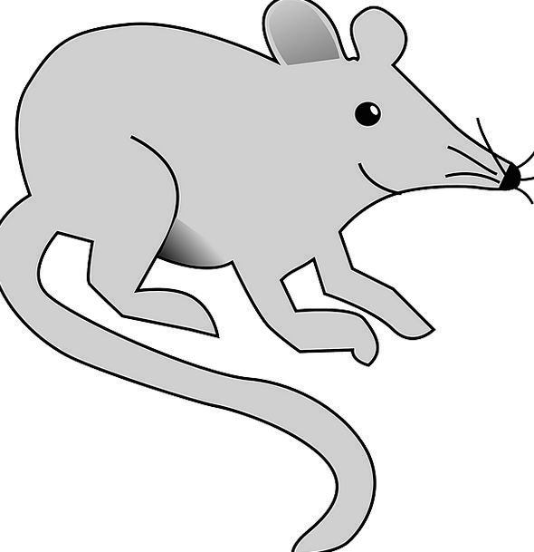 Mouse Swine Rodent Rat Pest Bother Gray Whiskers F