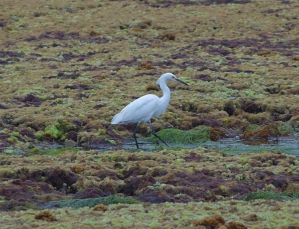 Bird Fowl Nature Countryside Heron Animals Faunae