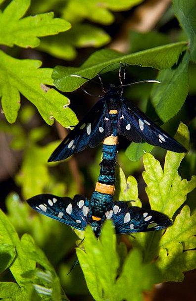 Butterfly Butterflies Nerves Copulate Pair Couple