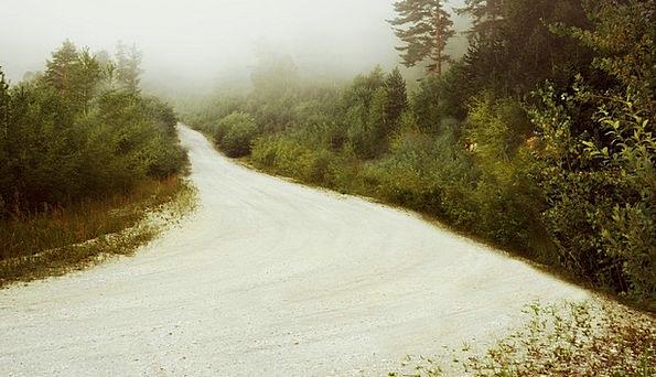Forest Woodland Landscapes Mist Nature Road Street