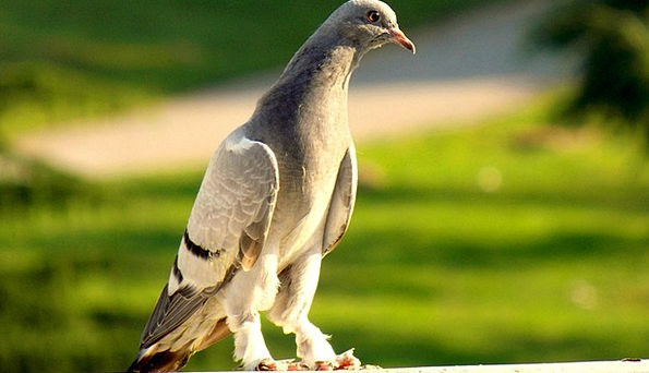 Pigeon Mark Landscapes Natures Nature Beautiful Lo