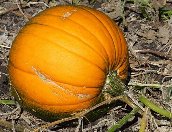 Pumpkin Drink Plant Food Orange Carroty Vegetable