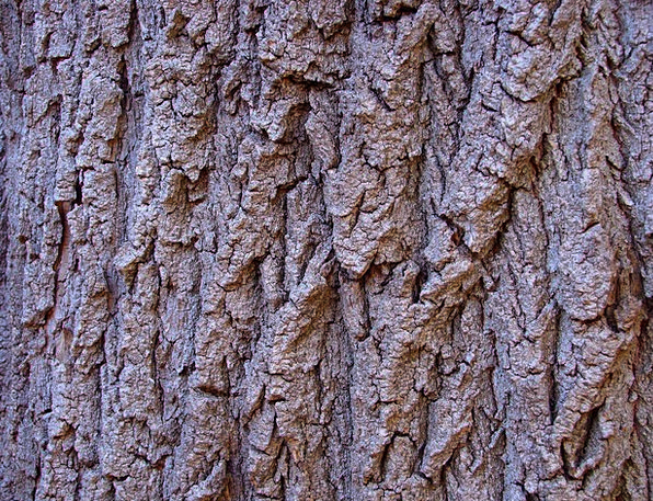 Tree Bark Textures Timber Backgrounds Texture Feel