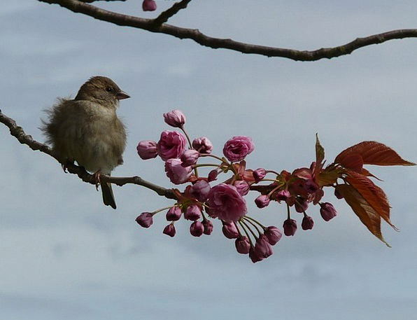 Bird Fowl Street Branch Division Road Flowering Tw