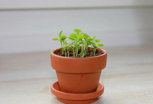 Herbs Basils Plot Forget Me Not Garden