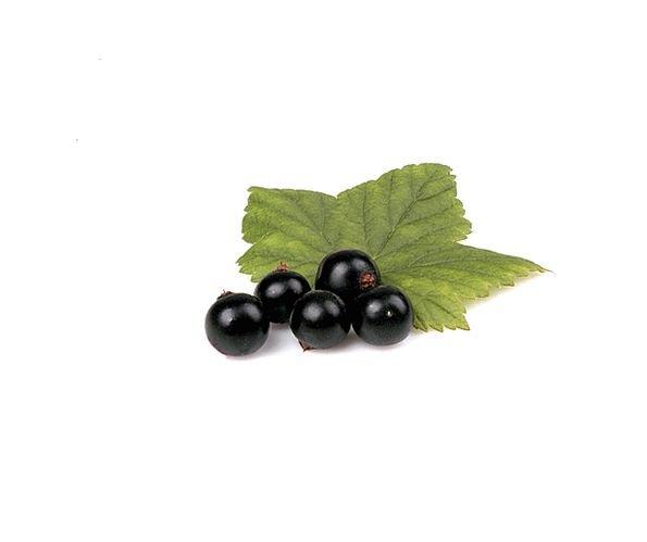 Berry Drink Dark Food Leaf Foliage Black Nutrition