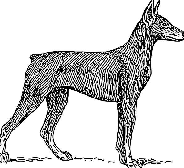 Dog Canine Domesticated Animal Physical Pet Mammal