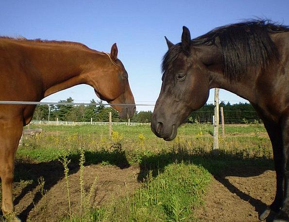 Horse Mount Equestrian Riding Stallion Summer Mamm