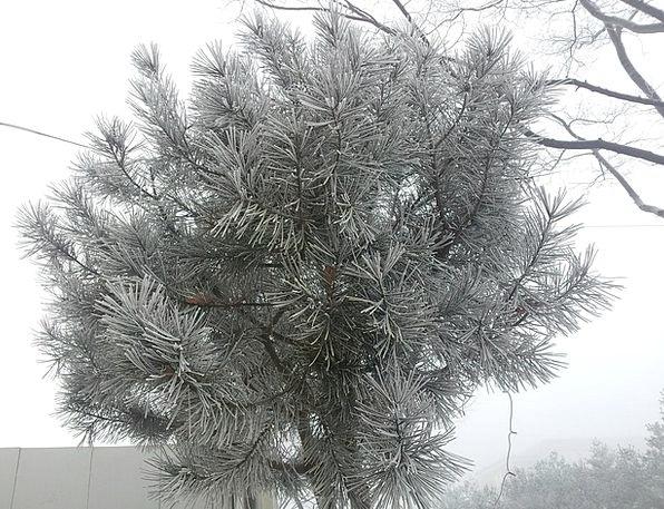 Wood Timber Snow Flower Winter Tree