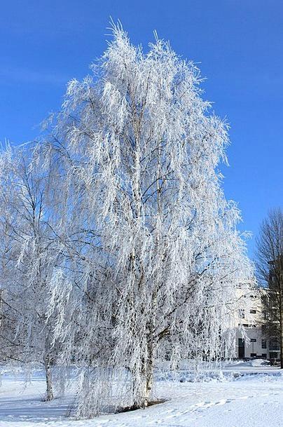 Oulu Landscapes Nature Winter Season Finland Snow